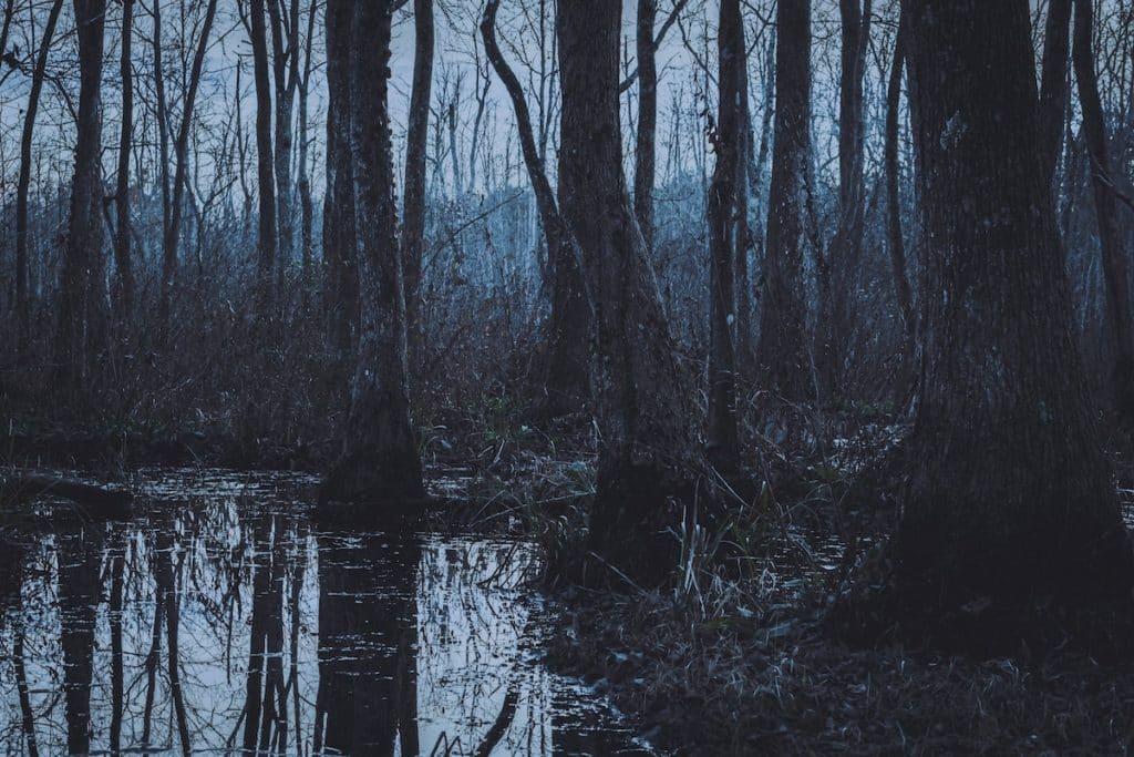 data swamp.